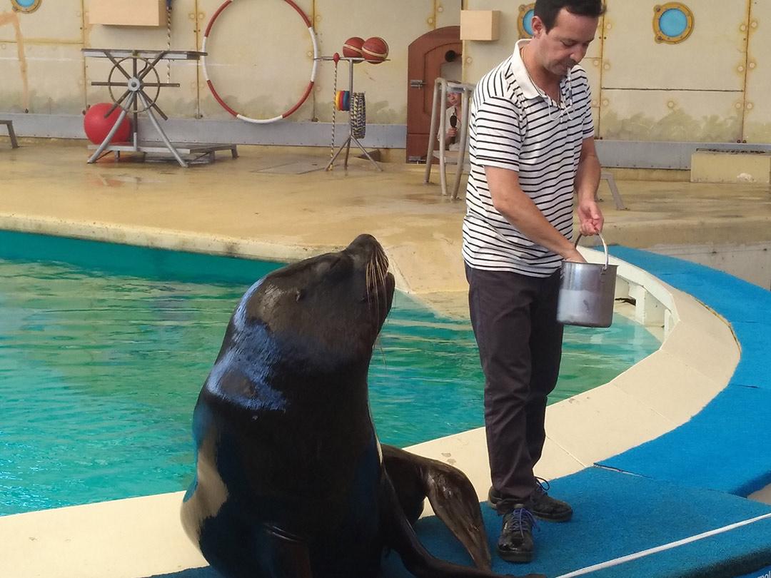 KITA Stärnschnuppe Ausflüge Kinderzoo Rapperswil: Seelöwenshow