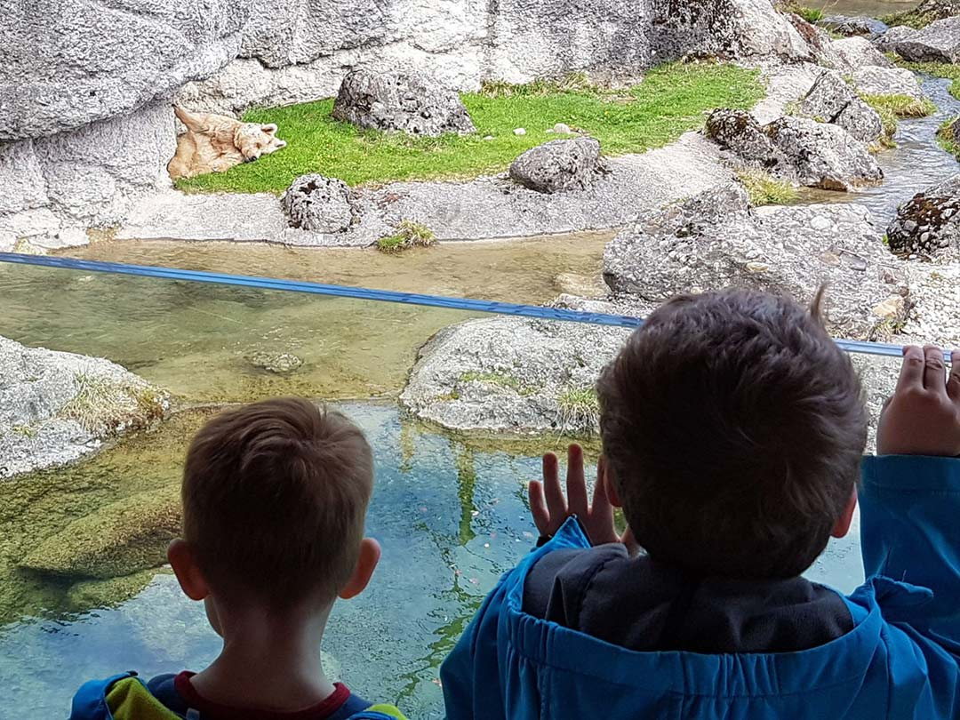 KITA Stärnschnuppe Ferienbetreuung Ostern: Tierpark Goldau Bär
