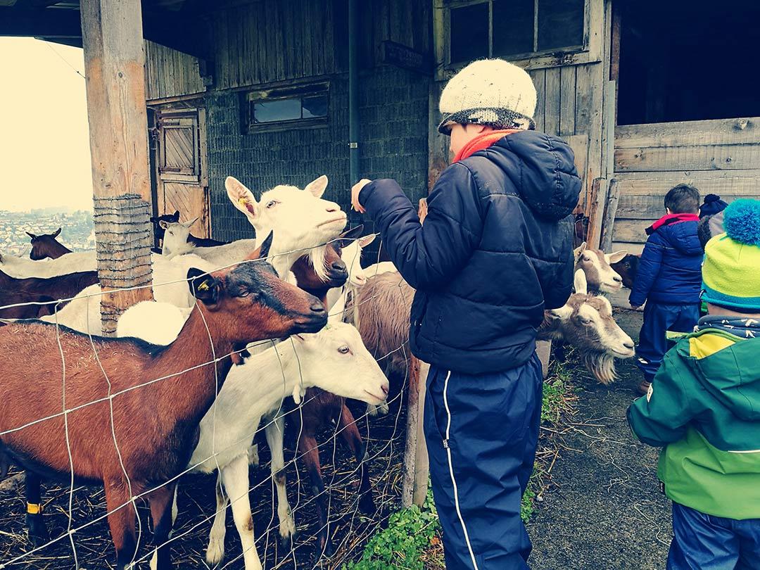 KITA Stärnschnuppe Ferienbetreuung Ostern: Ziegen auf dem Bauernhof