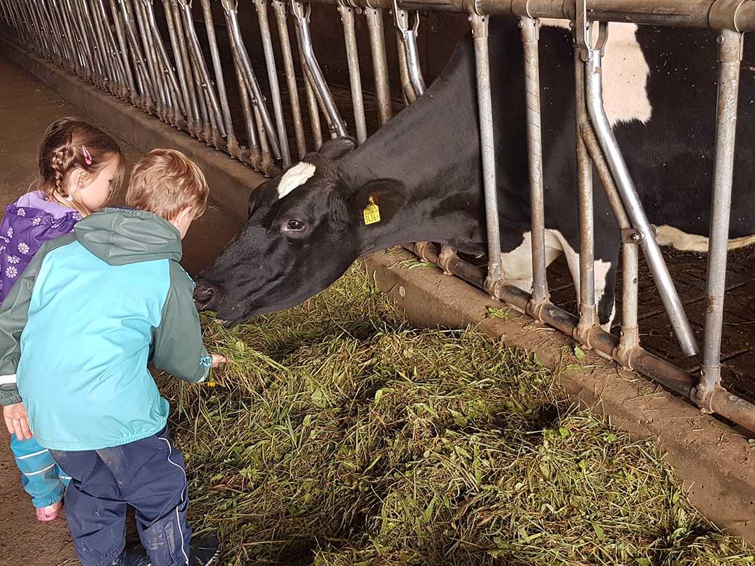 KITA Stärnschnuppe Ferienbetreuung Herbst: Kühe füttern auf dem Bauernhof