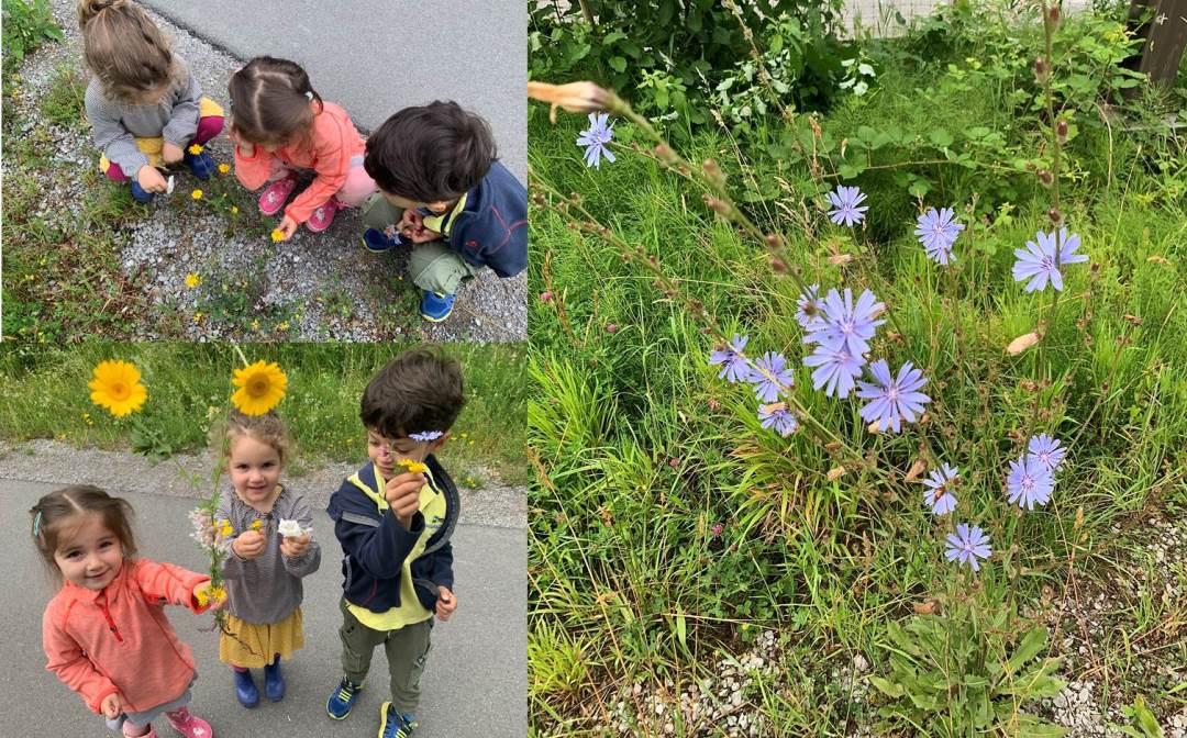 Kinderkrippe Staernschnuppe: Blumen in unserer Umgebung